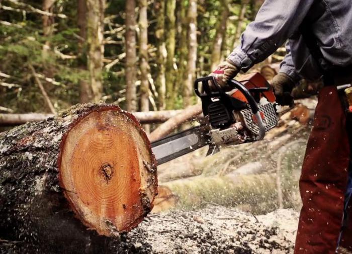 Депутата из Иркутской области подозревают в незаконной вырубке леса