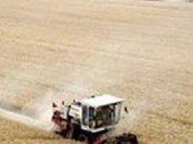 В России будет введена экспортная пошлина на пшеницу