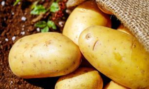 Картофель поможет при гипертонии