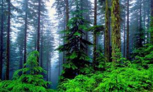 В Приангарье чиновники нелегально продали лес на 9 млн рублей
