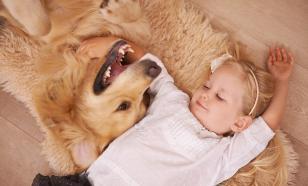 Что надо знать о собаках-няньках