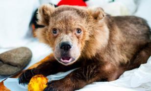 Американку приговорили к тюрьме за спасение медвежонка