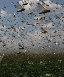 Глобальное потепление сократило количество насекомых. Чем это грозит?