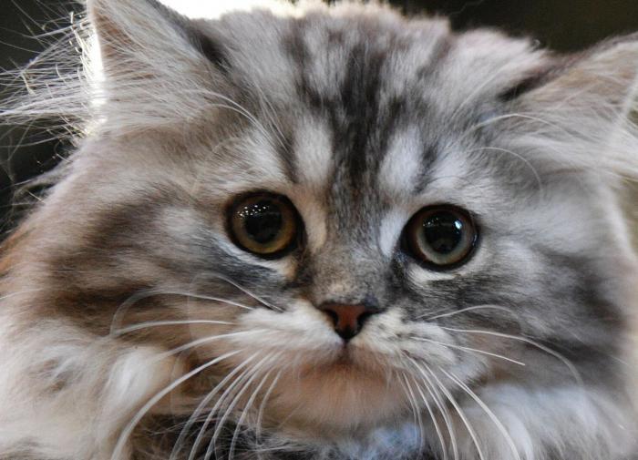 Почему у вас дома должен жить кот