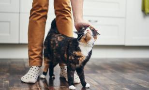 Четыре причины завести дома кота