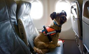 Для животных предлагают покупать билеты на отдельные места в самолете