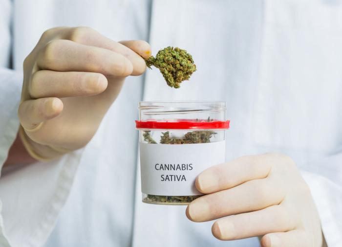 Зеленскому понадобилось срочно легализовать марихуану