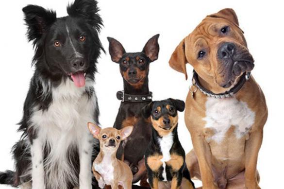 Сыромороженые корма опасны для собак