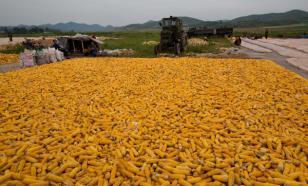 На фоне санкций: Северная Корея резко увеличила импорт продуктов из Китая