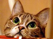 """Аллергию на кошек победят """"кошачьи усы"""""""