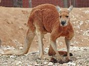 Зверушка терроризирует австралийскую семью