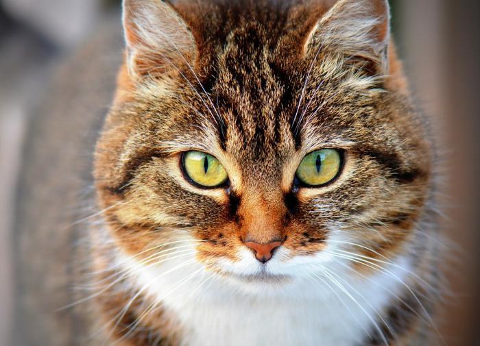 Биологи перечислили животных, которые могут заразиться COVID-19