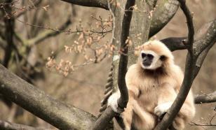 В Индии обнаружены останки неизвестного древнего примата