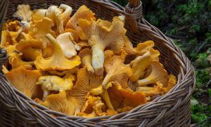 Роспотребнадзор рекомендовал не кормить детей до 14 лет грибами