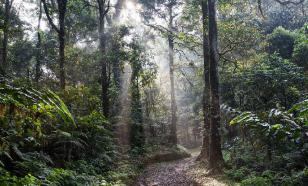 90 млн лет назад в Антарктиде были тропические леса