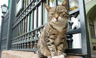 Эрмитажный кот предрек победу российским футболистам в матче с египтянами