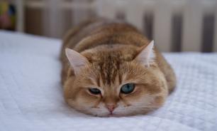 Россиянин обвинил своего кота в пожаре из-за непотушенной сигареты