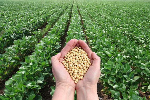 Россия намерена сохранить позицию крупнейшего экспортера пшеницы
