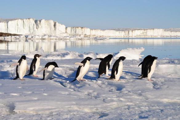 В Антарктиде пингвин прокатился в лодке с учеными