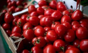 Американские врачи: помидоры эффективны против развития рака