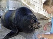 Петербург обзаведется самым большим зоопарком в Европе