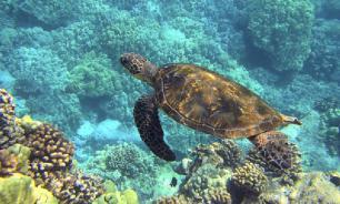 Морские черепахи помогут исследователям составлять прогноз погоды
