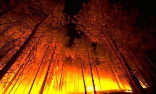 Площадь лесных пожаров в РФ за сутки выросла почти вдвое