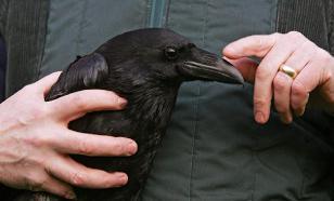 Вороны могут запоминать абстрактную информацию