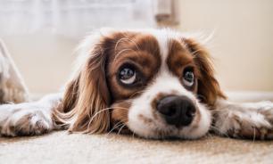 В Саратове работники муниципального учреждения убивали бездомных собак