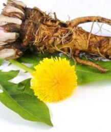 Открытие: корень одуванчика убивает раковые клетки за 48 часов