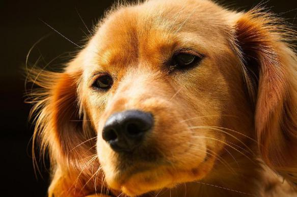 Роспотребнадзор: собаки могут заразить опасным эхинококкозом