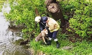 Спасатели МЧС вытащили собаку из реки в Наро-Фоминске