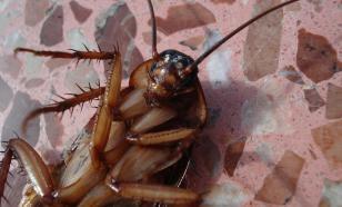 В Москве местный житель умер после попытки вывести тараканов
