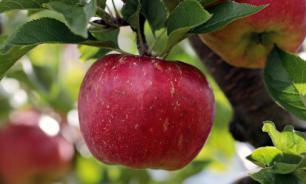 Два яблока в день защитят от сердечных заболеваний