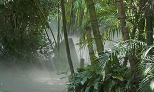 Амазонка: обнаружен 50-летний мужчина неизвестного науке племени