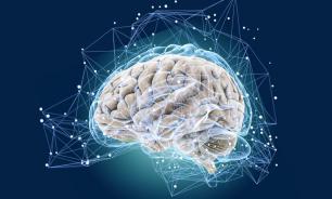 """Российские ученые объяснили систему """"хранения"""" слов в мозге"""