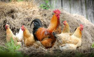 Специалисты поняли, как распространяется вирус птичьего гриппа