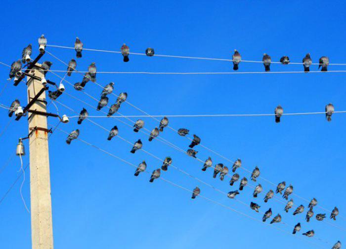 В США разработали новую технологию защиты электропередач от птиц
