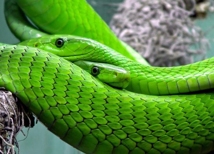 Ученые раскрыли состав змеиного яда