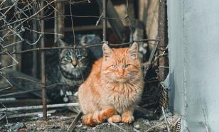 В Петербурге живут более 100 тысяч бездомных кошек