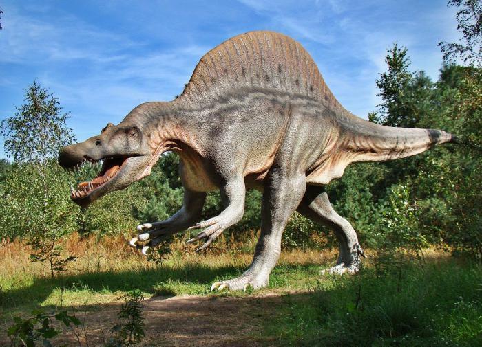 В Бразилии обнаружили ступню динозавра неизвестного вида