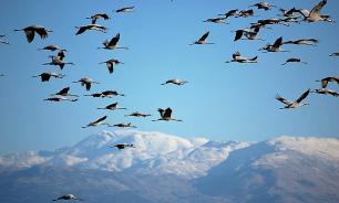 В Сочи начался пик осенней миграции птиц
