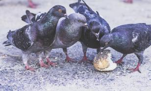 Москвичей просят кормить голодающих столичных птиц