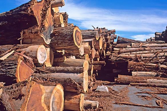 В России будут восстанавливать леса с помощью клонов деревьев