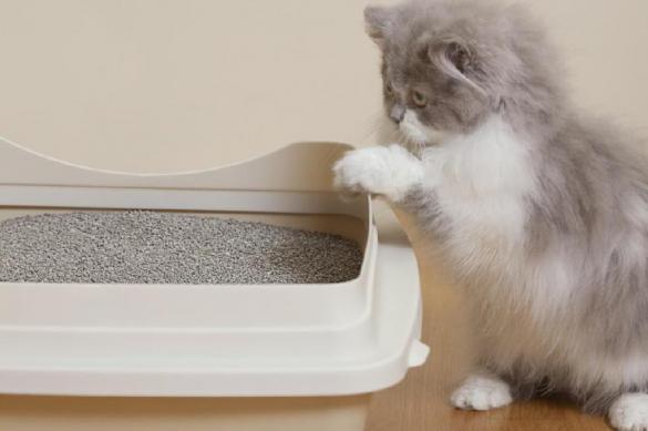 Как приучить кошку к лотку: секреты и рекомендации
