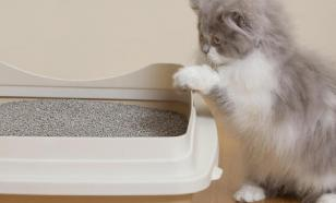 Чем заманить кошку на лоток