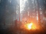 Огнеборцы сократили площадь лесных пожаров на 8 тысяч гектаров