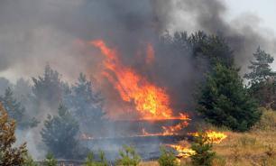 Лесной пожар как зеркало человеческого фактора