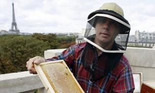 Пчелы Собора Парижской Богоматери выжили при пожаре