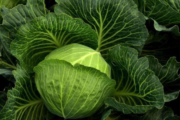 Минсельхоз заявил о снижении оптовых цен на капусту и огурцы